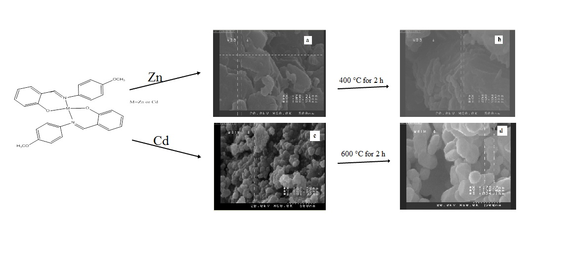 Synthesis and Characterization of Nano Sized ZnO and CdO by Direct Thermal Decomposition of Their Nano Sized Metal Schiff base Complexes