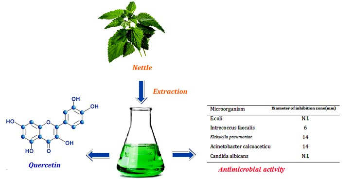 Comparison of Different Extracts of Nettle in Quercetin and Evaluation of its Antimicrobial Activity