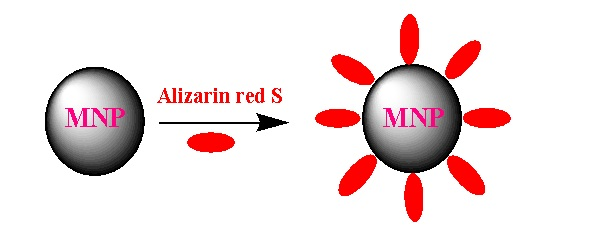 A Comparative Study for Adsorption of Alizarin Red S from Aqueous Samples by Magnetic Nanoparticles of Fe3O4, CoFe2O4 and Ionic Liquid-Modified Fe3O4