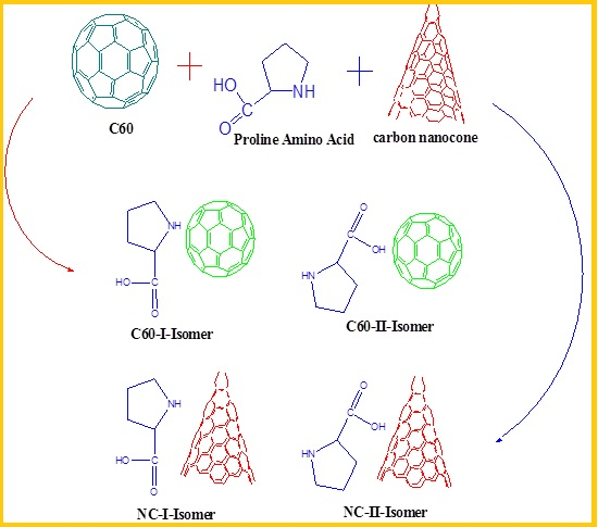 Evaluating Adsorption of Proline Amino Acid on the Surface of Fullerene (C60) and Carbon Nanocone by Density Functional Theory